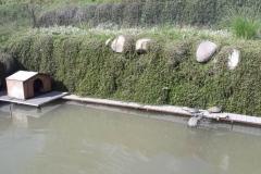 Il laghetto con le tartarughe ad Adro (BS)