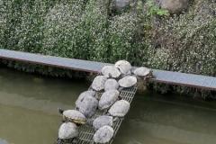 Il laghetto di tartarughe - Adro (BS)
