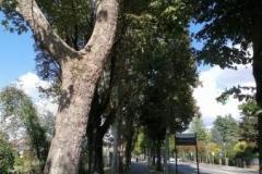 Viale Santa Maria della Croce - Crema